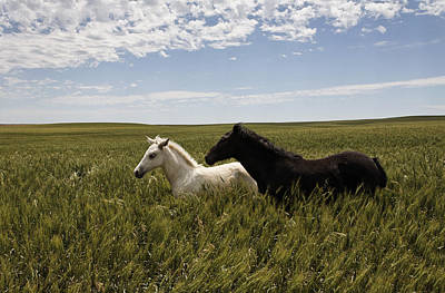A Pair Of Protected Wild Horse Foals Poster by Melissa Farlow