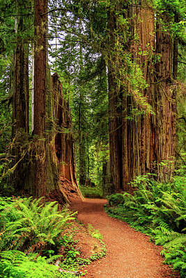 Poster featuring the photograph A Path Through The Redwoods by James Eddy