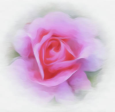 A Perfect Pink Rose Poster