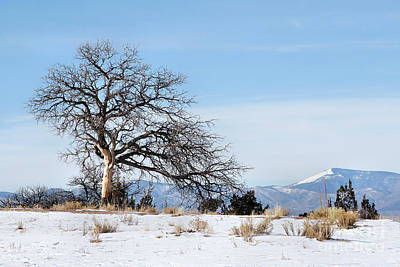 A Placid Winter Scene Poster