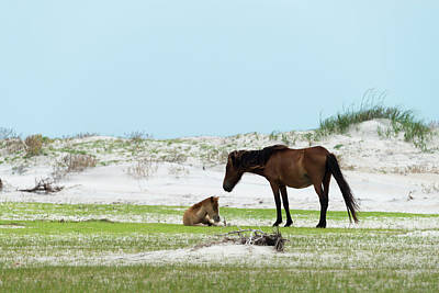 A Protective Mother With Her Foal Poster