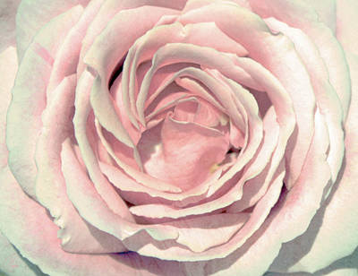 Poster featuring the digital art A Rose Is A Rose by Margaret Hormann Bfa