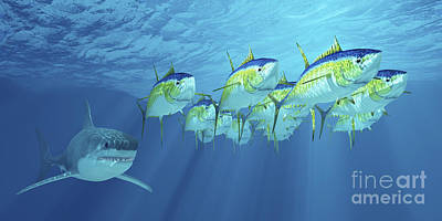 A School Of Yellowfin Tuna Is Followed Poster by Corey Ford