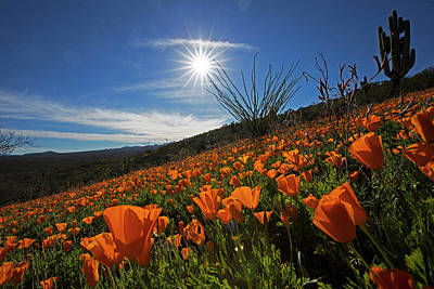 A Sea Of Poppies Poster