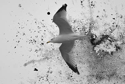 A Splash Of Gull Bird Art Poster by Jai Johnson