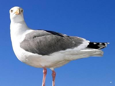 A Splendid Seagull Poster