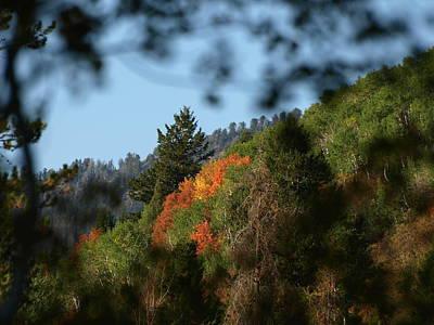 Poster featuring the photograph A Spot Of Fall by DeeLon Merritt