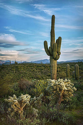 Poster featuring the photograph A Spring Evening In The Sonoran  by Saija Lehtonen