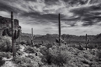 Poster featuring the photograph A Morning Hike In The Superstition In Black And White  by Saija Lehtonen