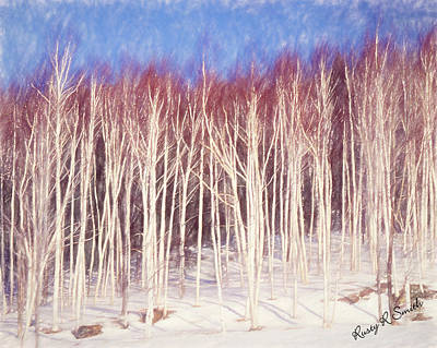 A Stand Of White Birch Trees In Winter. Poster