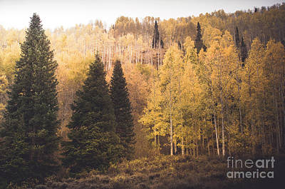 Poster featuring the photograph A Subtle Glow by The Forests Edge Photography - Diane Sandoval