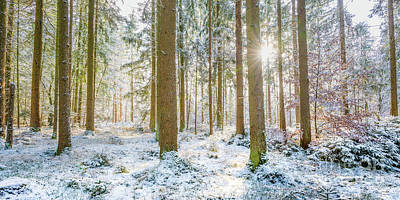 Poster featuring the photograph A Sunny Day In The Winter Forest by Hannes Cmarits