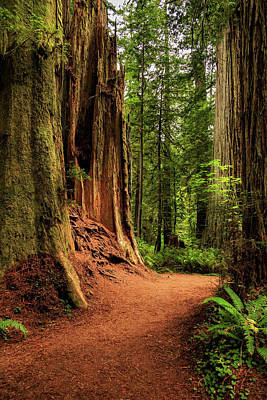 Poster featuring the photograph A Trail In The Redwoods by James Eddy