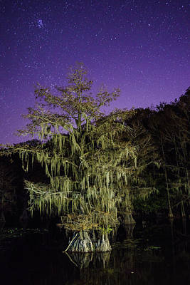 A Tree And North Eastern Starry Sky - A Portrait Of A Bald Cypress Poster