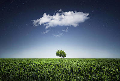 A Tree Covered With Cloud Poster by Bess Hamiti