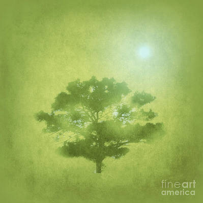 A Tree In The Pasture Poster