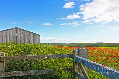 A West Pentire Farm Poster by Terri Waters