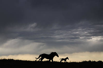 A Wild Horse And Foal Running Free Poster