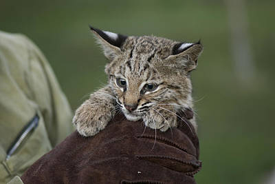A Wildlife Rescue Member Holds Poster