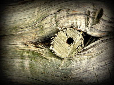 A Wooden Eye Poster by Cindy Wright