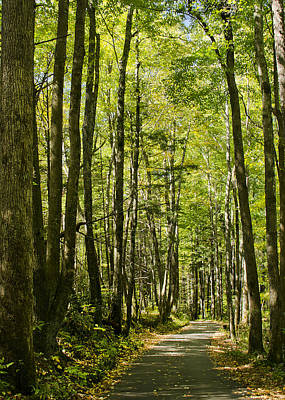 Poster featuring the photograph A Woodsy Trail by Wanda Krack