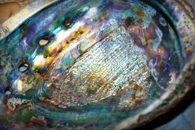 Abalone Poster by Cricket Hackmann