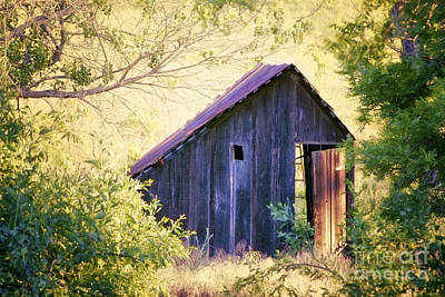 Abandoned Shed Poster by Suzon Murray