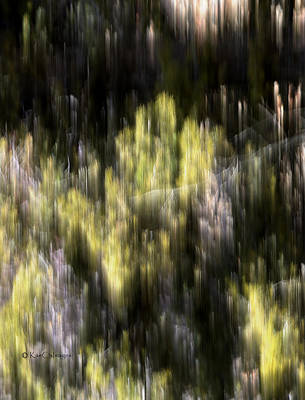 Poster featuring the photograph Abstract 3317 In The Forest by Kae Cheatham