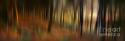 Autumn Forest Poster by Rod McLean