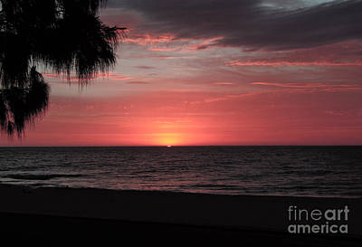 Abstract Beach Palm Tree Sunset Poster