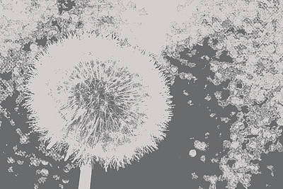 Abstract Black And White Dandelion Photo Art Poster