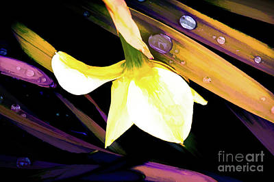 Abstract Daffodil And Droplets Poster