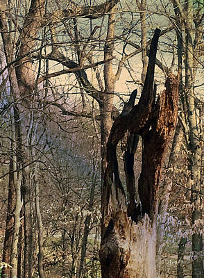 Poster featuring the photograph Abstract Dead Tree by Robert G Kernodle
