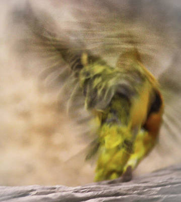 Abstract Finch Poster