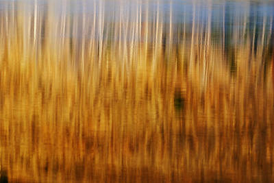 Abstract Image Of Trees Reflecting In Little Redfish Lake Stanley Idaho Usa Poster by Vishwanath Bhat