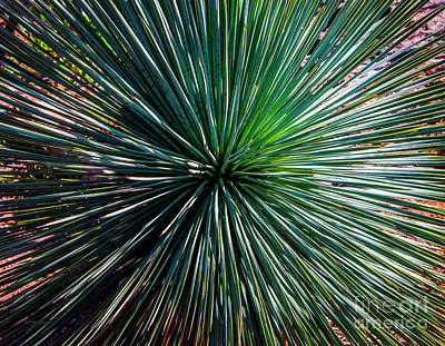 Abstract Nature Desert Cactus Photo 207 Blue Green Poster