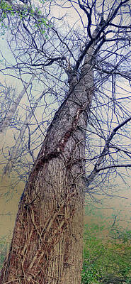 Poster featuring the photograph Abstract Tree Trunk by Robert G Kernodle