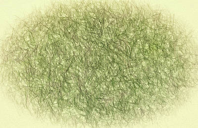 Abstractions From Nature - Pine Needles Poster