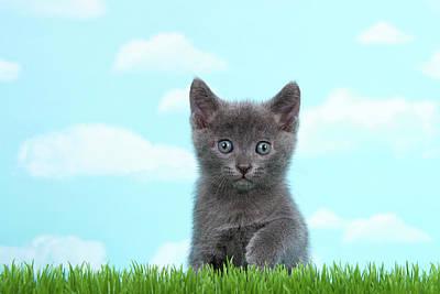 Adorable Grey Kitten Summer Day Poster