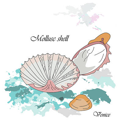 Adriatic Shells Poster