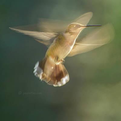 Aerial Dancing.... Poster