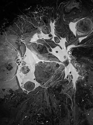 Aerial Photo Vulture Beak Yawn Poster