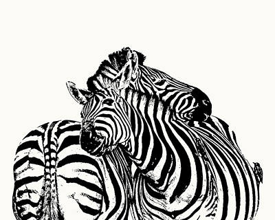 Poster featuring the photograph Affectionate Zebra Pair by Scotch Macaskill