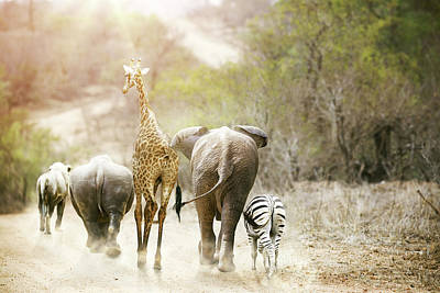 Africa Safari Animals Walking Down Path Poster