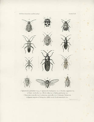African Bugs And Insects Poster