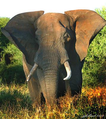 African Bull Elephant Poster