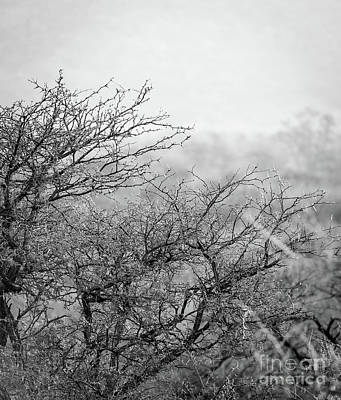 African Bush Black And White Poster