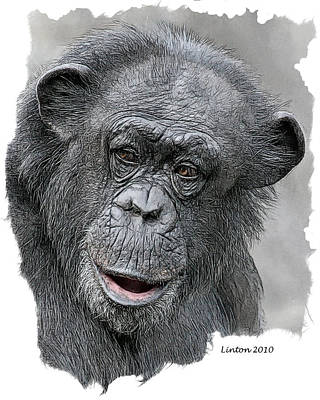 African Chimpanzee Poster by Larry Linton