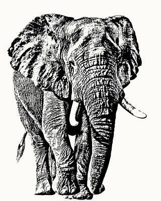 Poster featuring the photograph African Elephant Bull, Full Figure by Scotch Macaskill