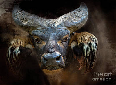 African Forest Buffalo Poster